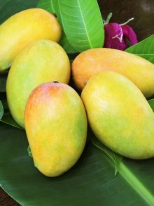 Taj Agro is a leading exporter of {Mango Pulp} from India