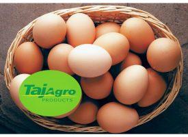 Hen Whole Egg Powder